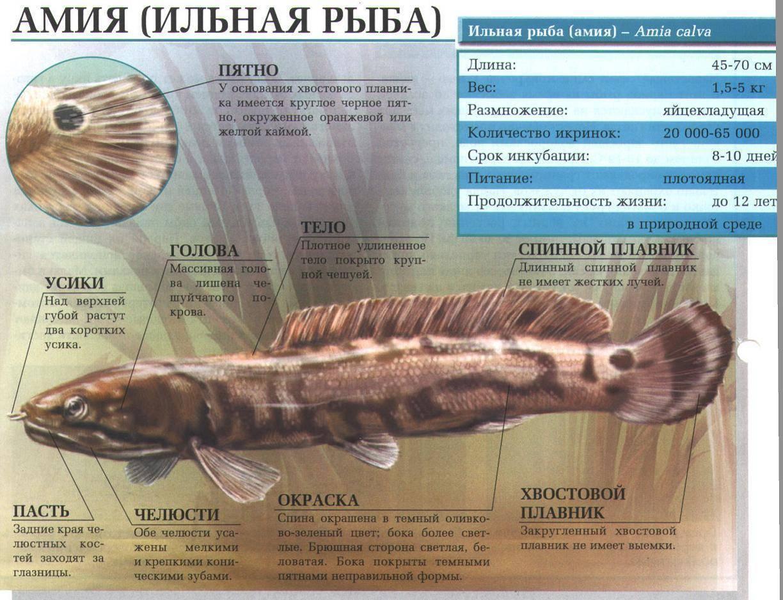 Ильная рыба. их особенности и рыбалка на некоторых из них