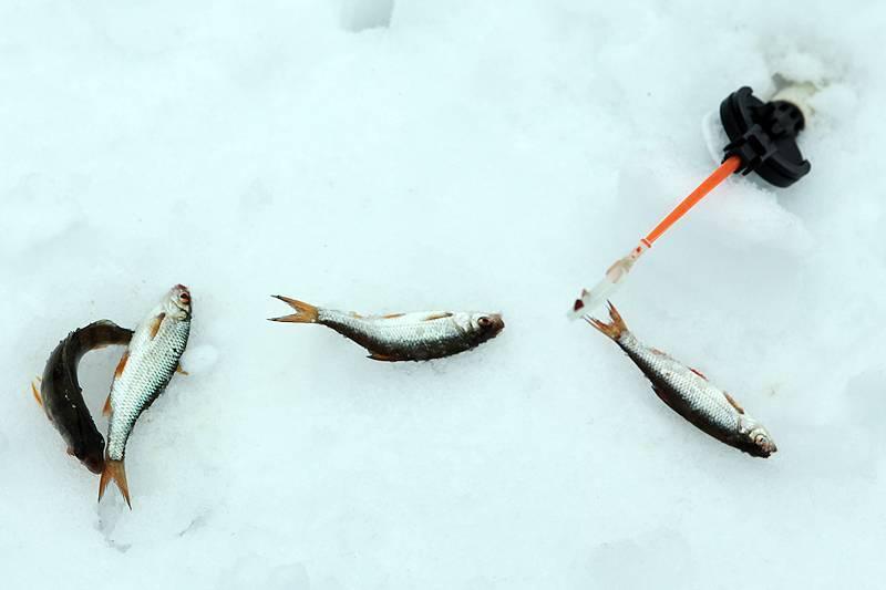Ловля чебака зимой на мормышку: видео процесса
