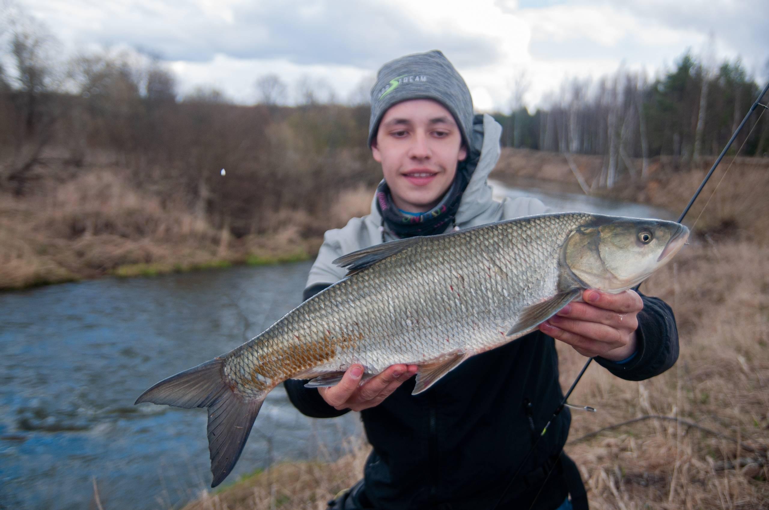 Жерех — что это за рыба?