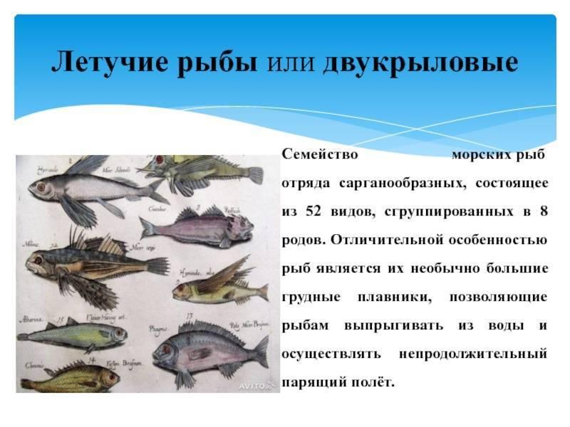 Как спят рыбы в аквариуме?