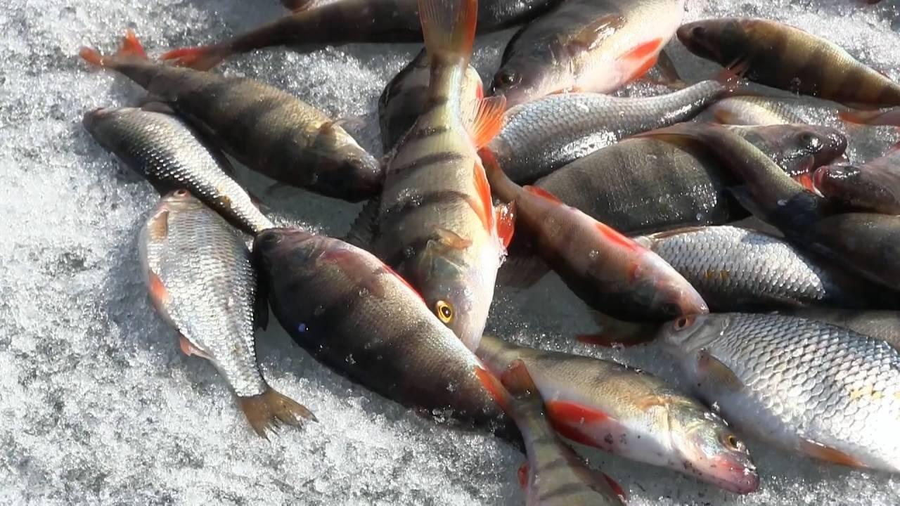 Рыбалка на белом море — какая рыба водится (фото и названия), лучшие рыболовные базы
