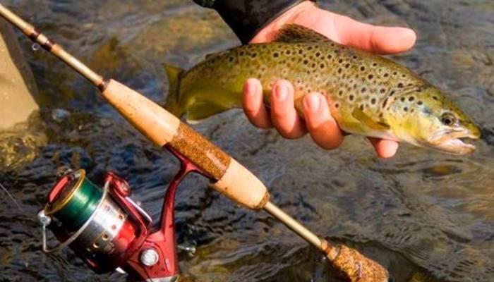 Как и на что ловить форель в разный условиях рыбалки