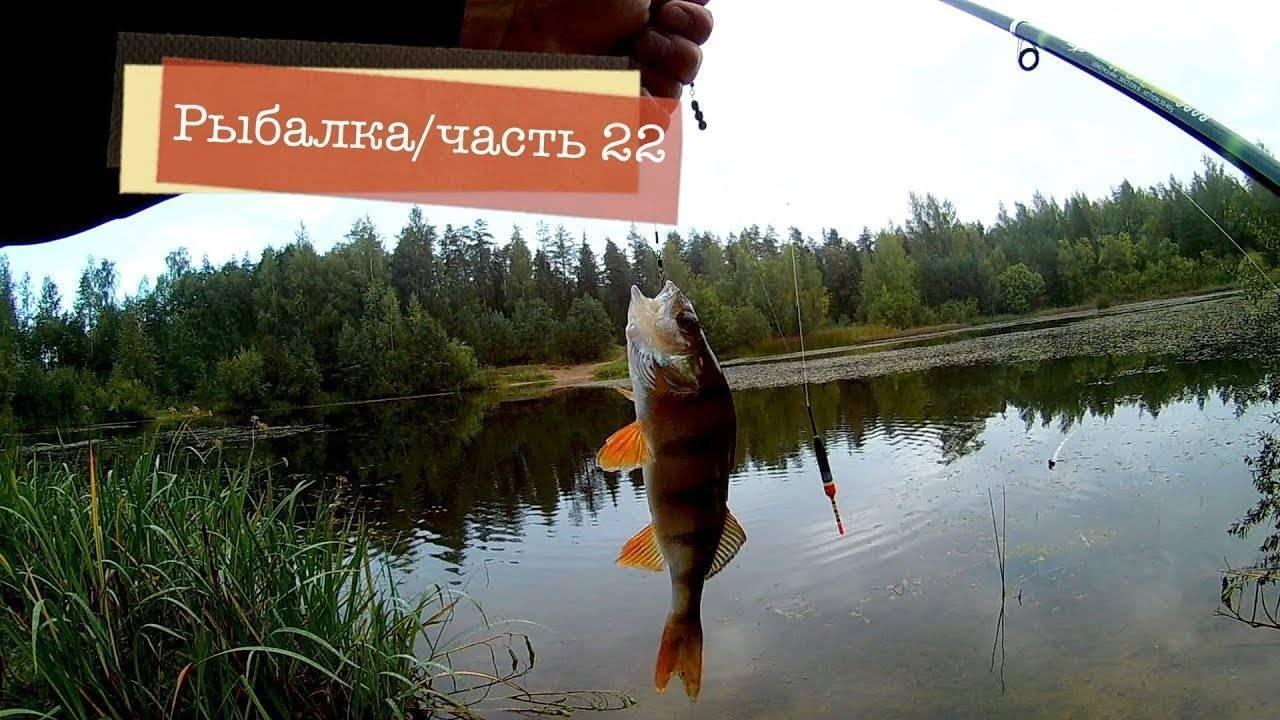 Ловля окуня на живца с помощью поплавочной удочки – рыбалке.нет