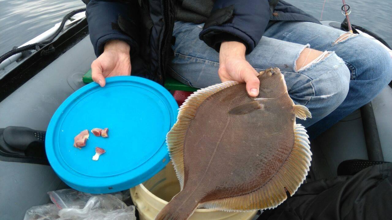 Как ловить камбалу с берега и лодки: приманки, снасти, особенности ловли
