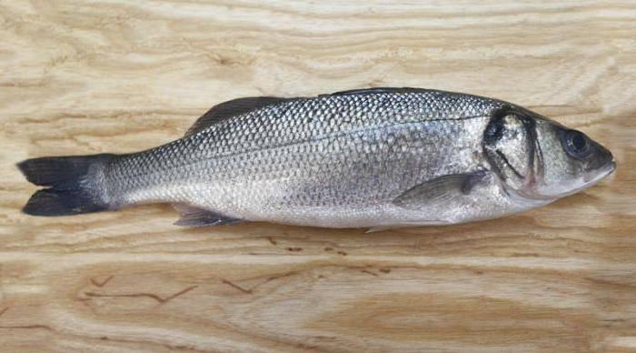 Лаврак европейский (dicentrarchus labrax) или seabass