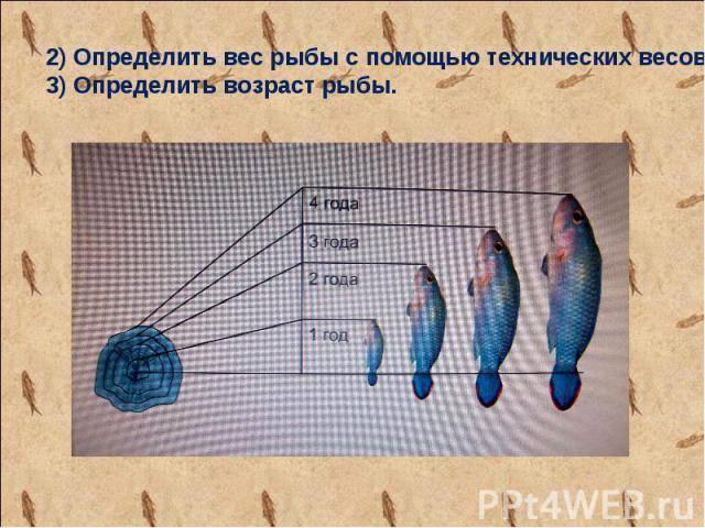Что такое нерест у рыб – описание процесса, как стимулировать