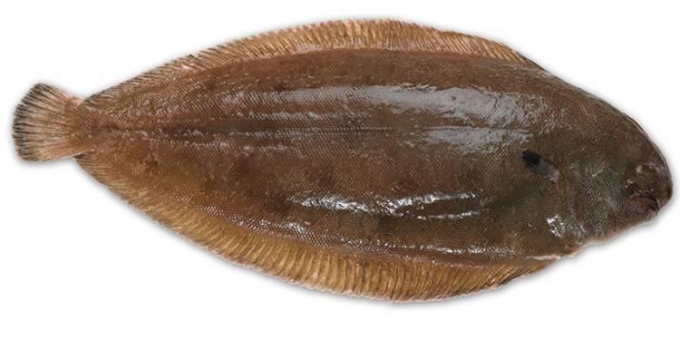 Морская рыба: польза и положительное воздействие на организм. в каких случаях морская рыба наносит вред здоровью? - автор екатерина данилова - журнал женское мнение