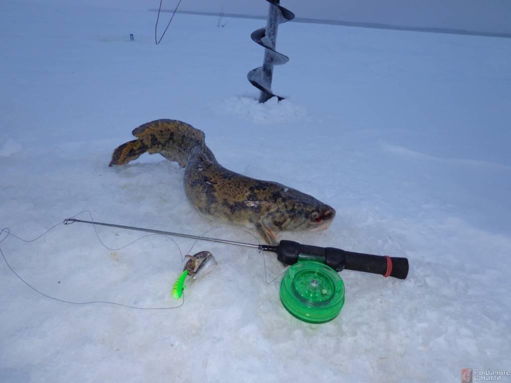 Ловля налима на жерлицы в зимний период - на рыбалке!