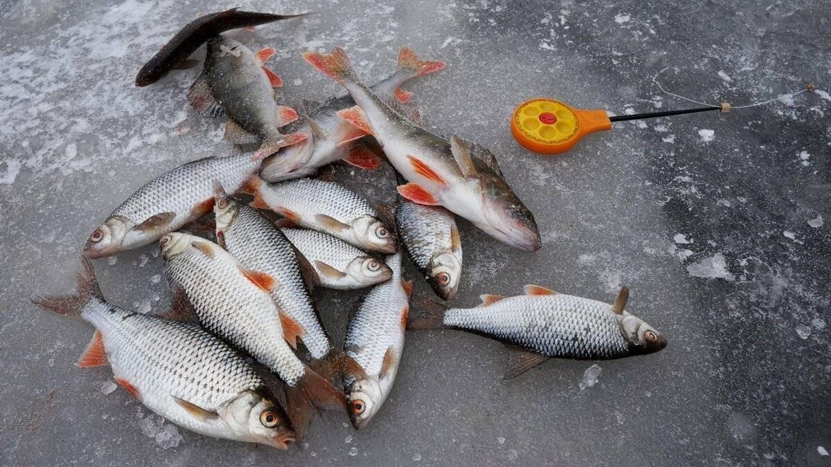 Рыбалка в рязанской области: обзор платных и бесплатных мест, отзывы