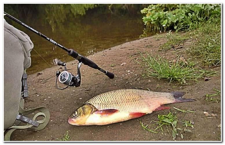 Ловля язя на спиннинг - читайте на сatcher.fish