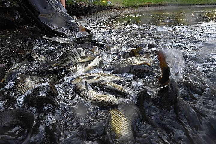 ✅ платная рыбалка в рыбном хозяйстве раково — цены и правила - рыбзон.рф