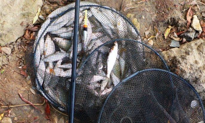 Ловля уклейки весной на поплавочную удочку