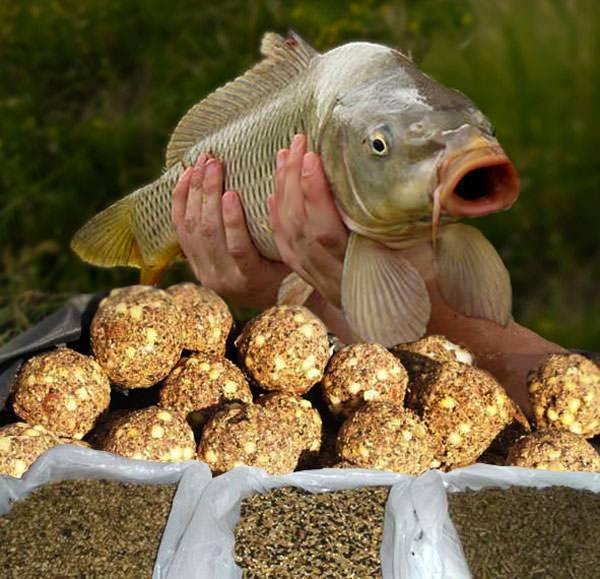 Сазан. ловля сазана. рыболовные снасти и приманки на сазана.