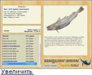 Дешевая рыба тресковых пород. большое семейство тресковых рыб