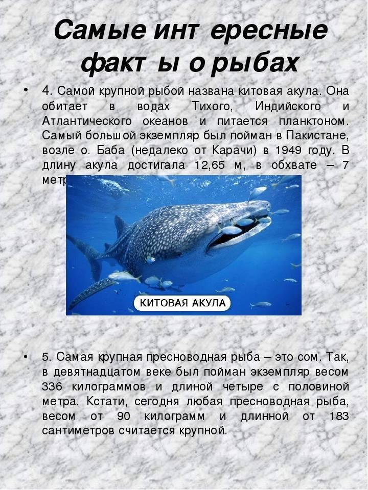 Как спят аквариумные рыбы: ночью и днём, сон в открытых водоёмах