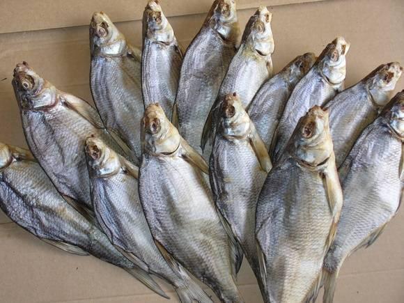 Как вялить и сушить рыбу: леща, плотву и другой улов