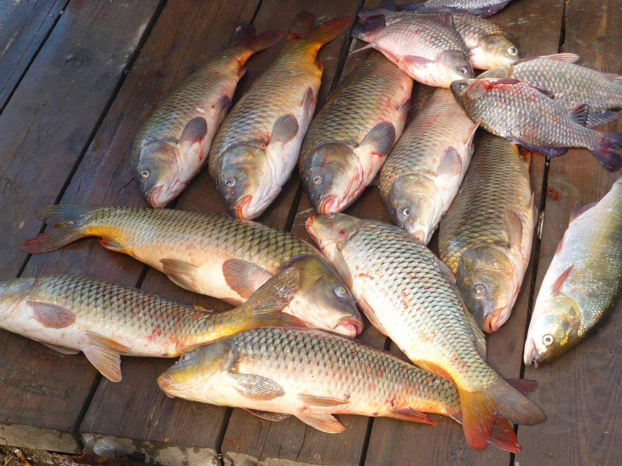 Платная рыбалка и базы отдыха в могилевской области