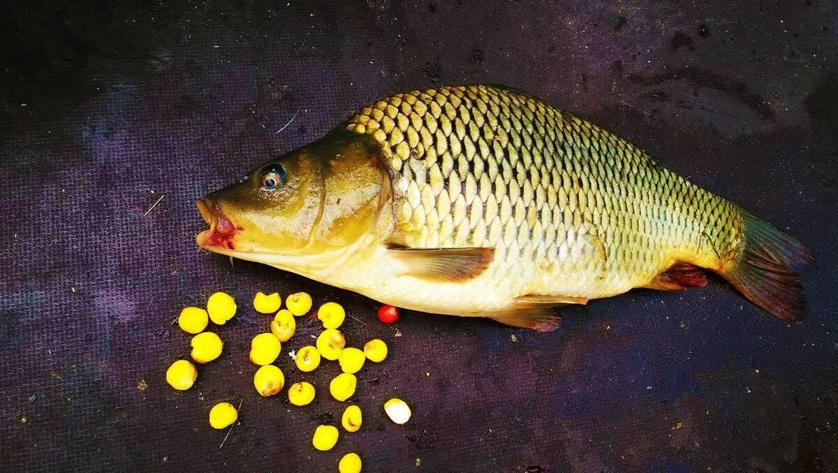Рыбалка в рыбном хозяйстве «бисерово»