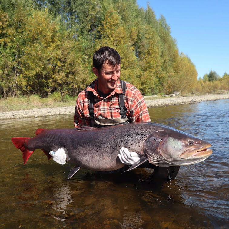 Рыбалка на тайменя: особенности ловли в сибири