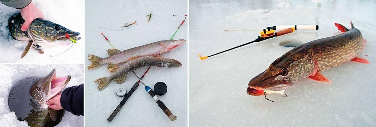 Ловля щуки зимой на реке, где искать на что ловить + видео
