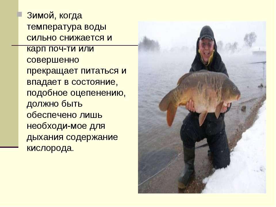 Чем питаются рыбы в зимнее время - все о рыбалке