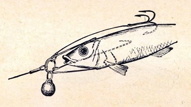 Где искать и ловить щуку в октябре, сентябре, в реке, озере и на пруду: особенности рыбалки в кувшинках, траве, камышах, коряжнике, на течении и на глубине