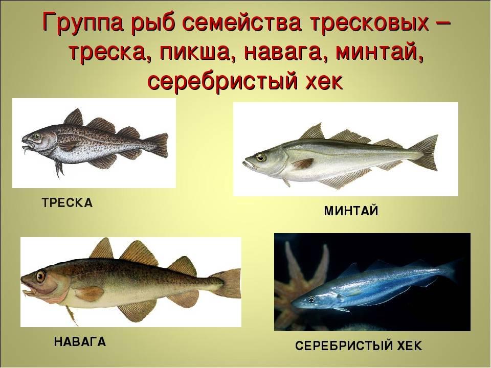 Контрольная работа: рыбы и рыбные товары - bestreferat.ru