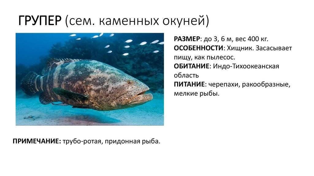 Рыба кета