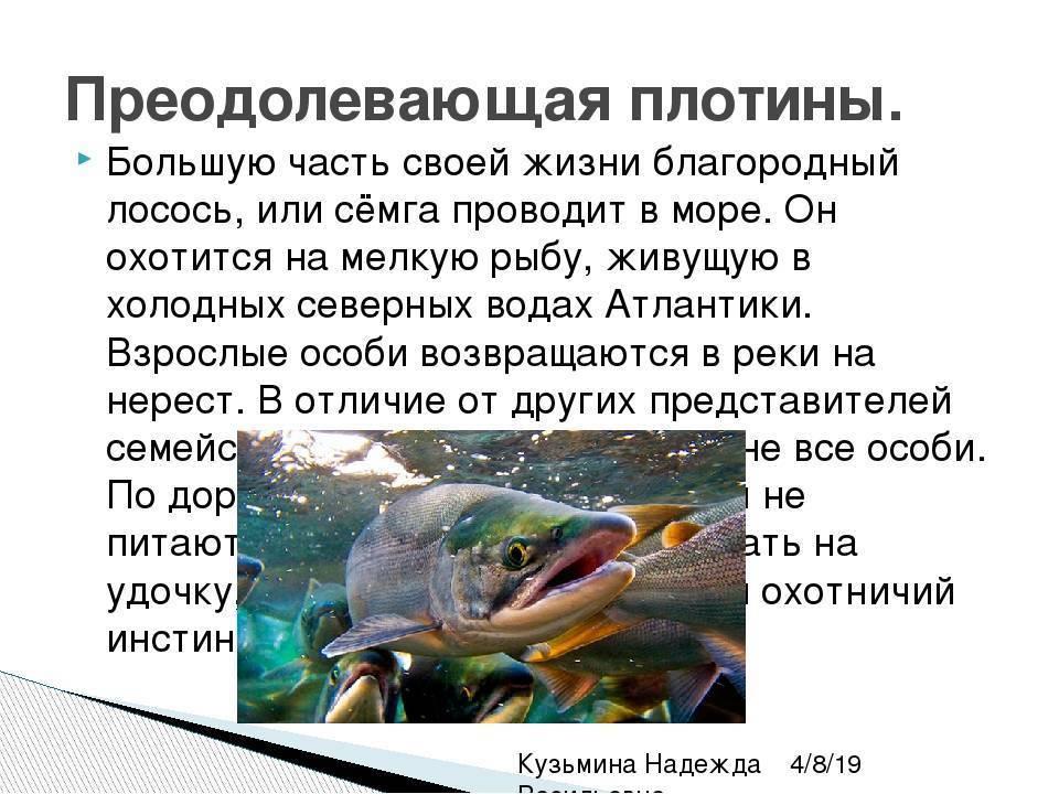 Интересные факты о животных, птицах и рыбах