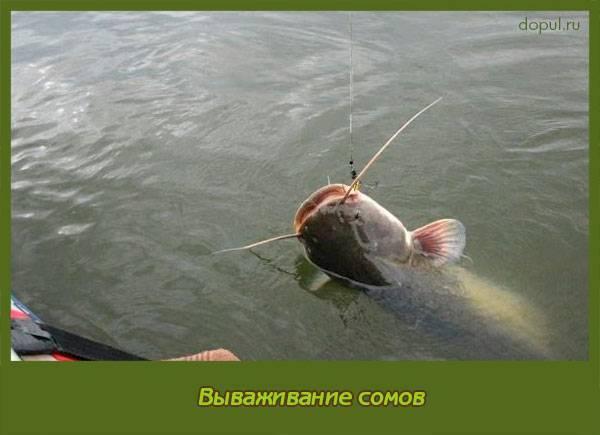 5 снастей для ловли сома с берега и с лодки