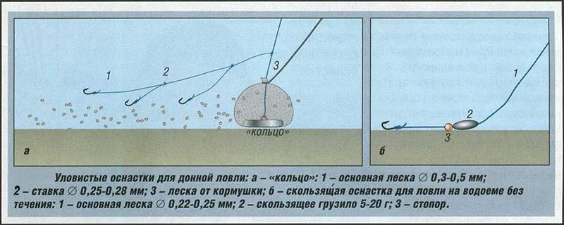 Донка на судака: ловля судака донкой на живца с берега и с лодки