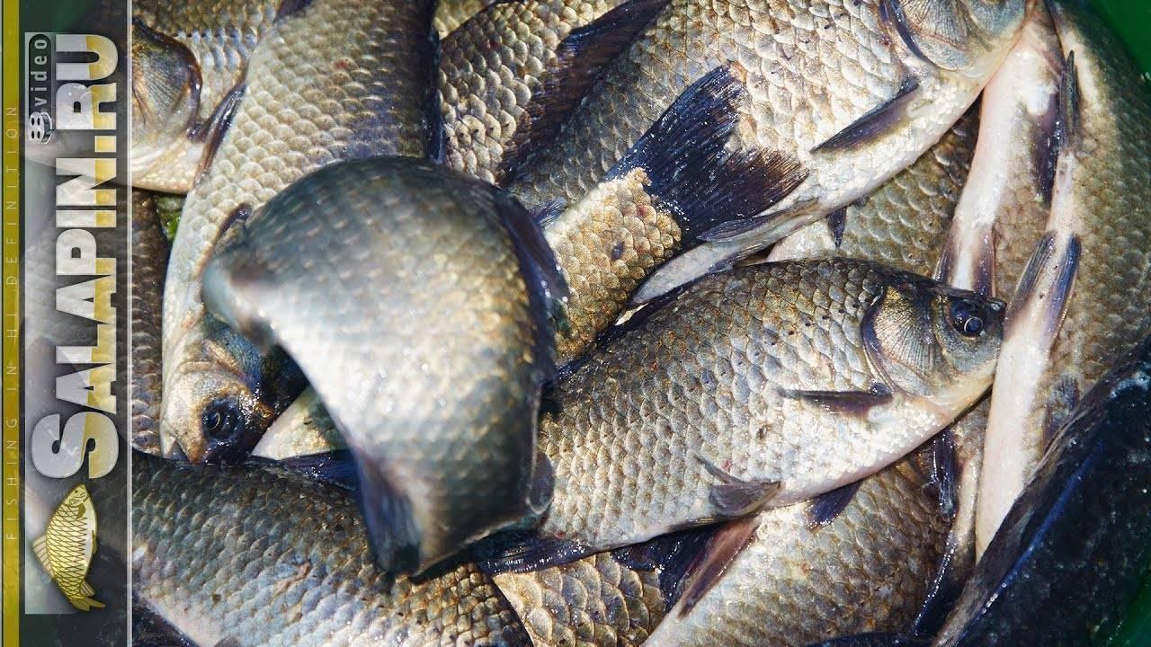 Ловля карася при использовании пикера – рыбалке.нет