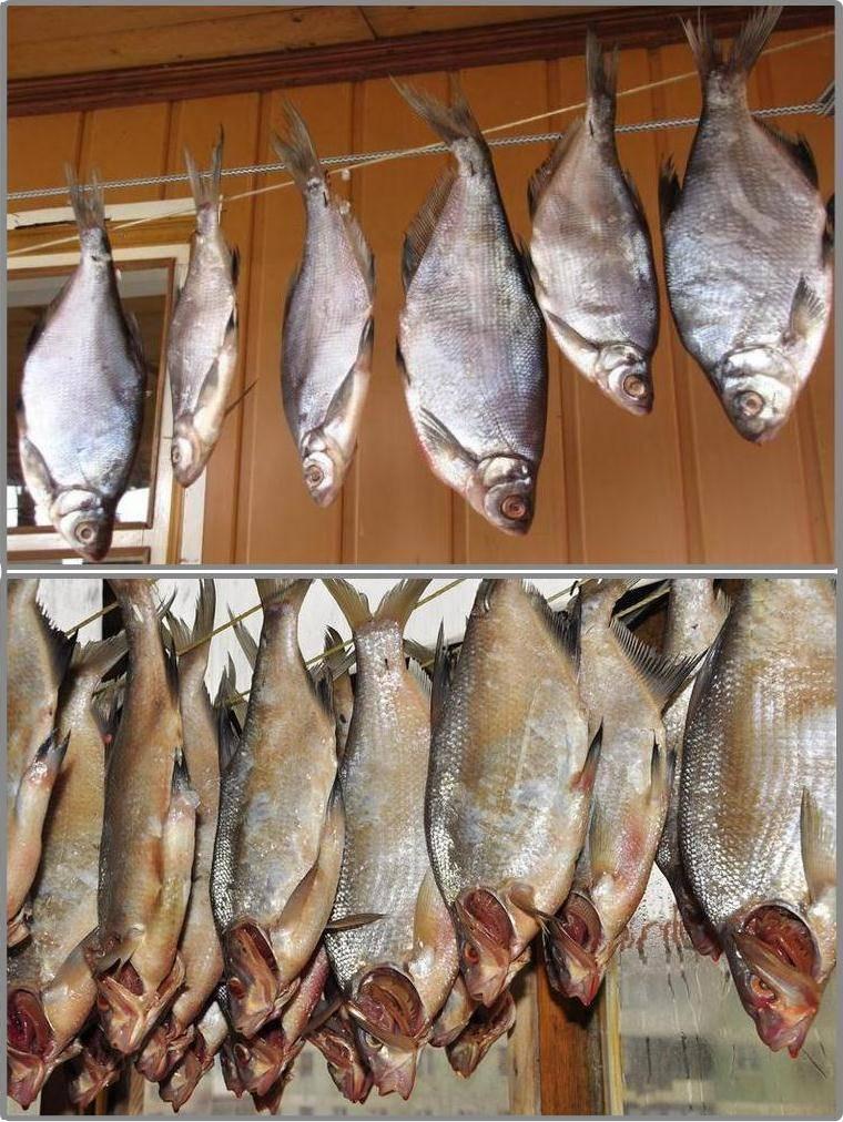 Вяленая рыба в электросушилке – кулинарный рецепт
