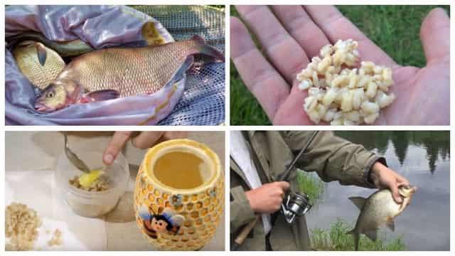 Прикормка для леща - лучшие рецепты весной, летом, зимой и осенью
