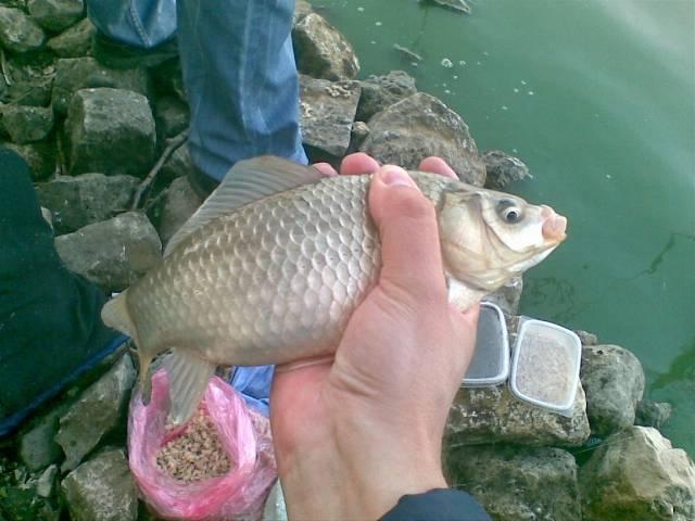 Отчеты о рыбалке тольятти — про рыбалку