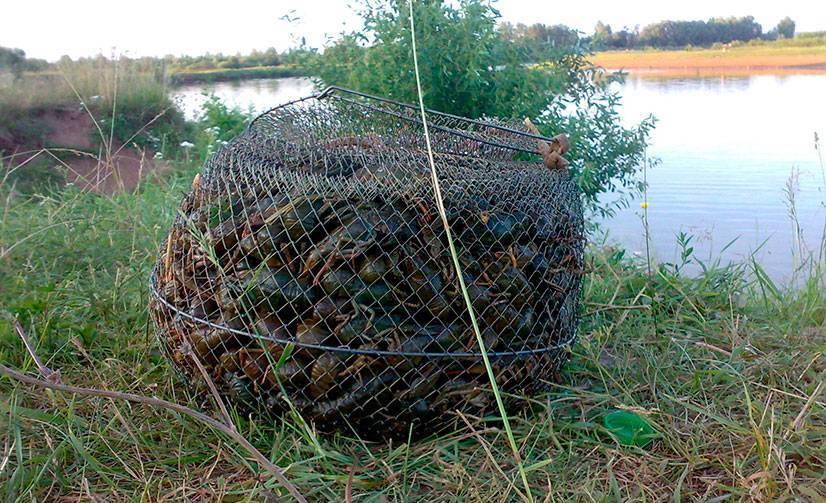 ✅ как сделать хватку для ловли рыбы своими руками - рыбзон.рф