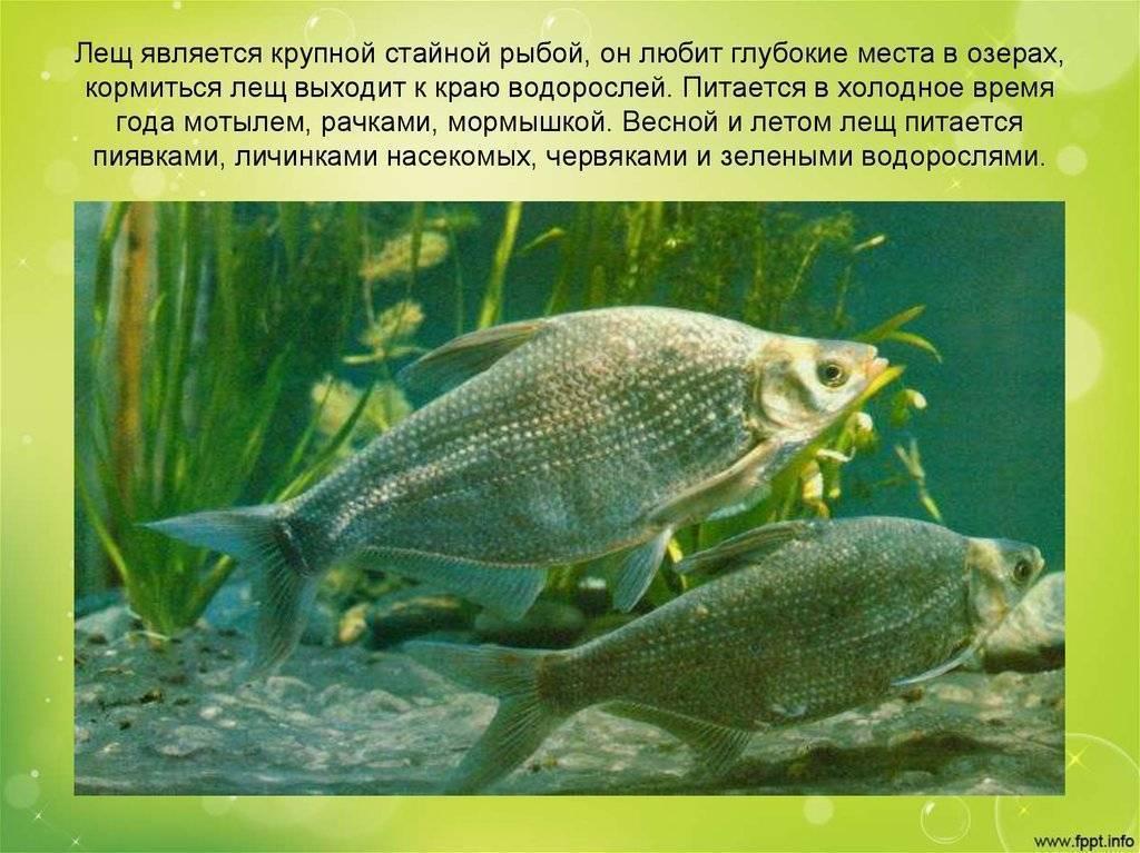 Самые популярные заболевания аквариумных рыбок и их лечение