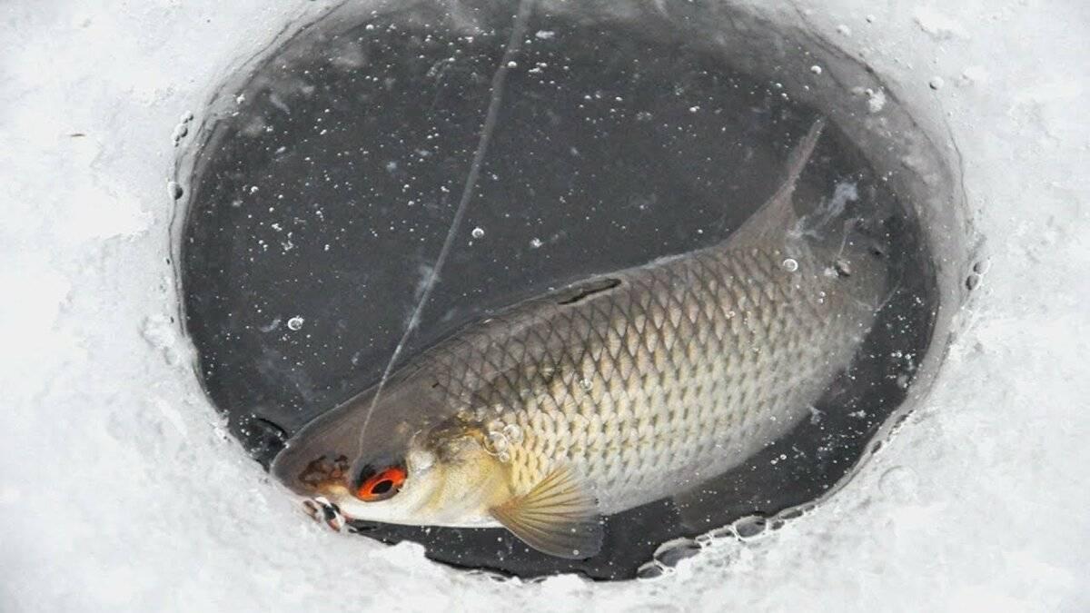 Рыбалка на мормышку зимой: видео, особенности ловли на течении