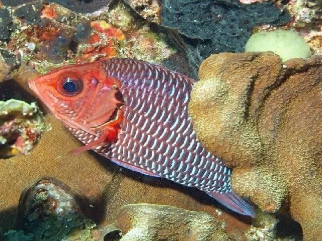 Особенности рыбы кеты и ее приготовление в кулинарии