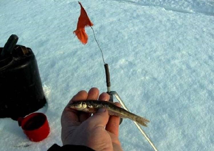 Жерлицы на щуку: виды, способы изготовления своими руками летних и зимних снастей