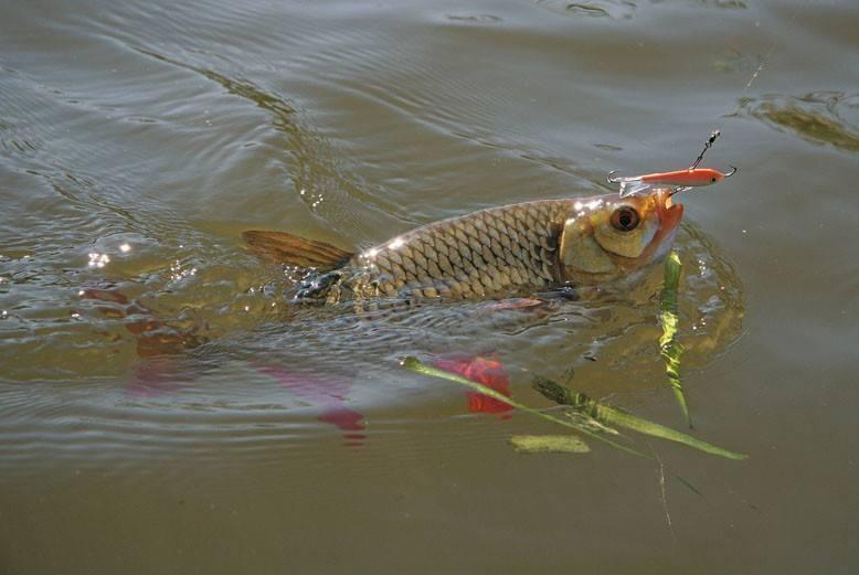 Полезные советы для поплавочной ловли