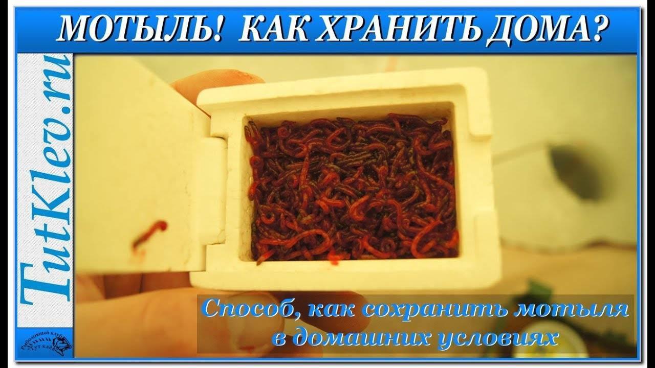 Хранение мотыля в домашних условиях