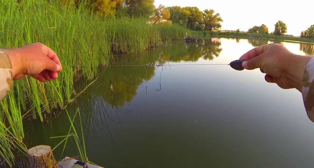 Когда начинают ловить весеннего карася — советы бывалых рыбаков