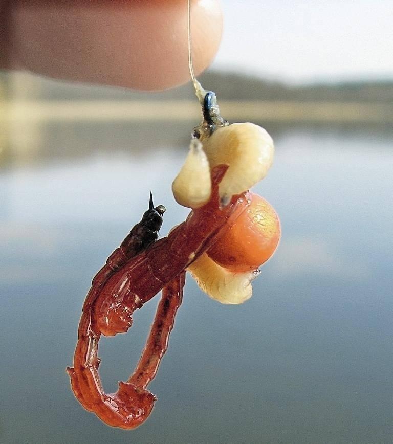 На что ловится рыба белый амур? снасти для ловли