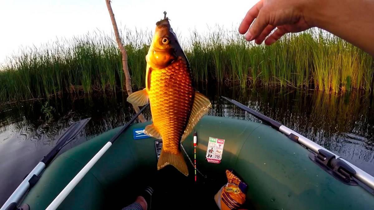 Снасти для ловли карася: самые эффективные по мнению рыбаков