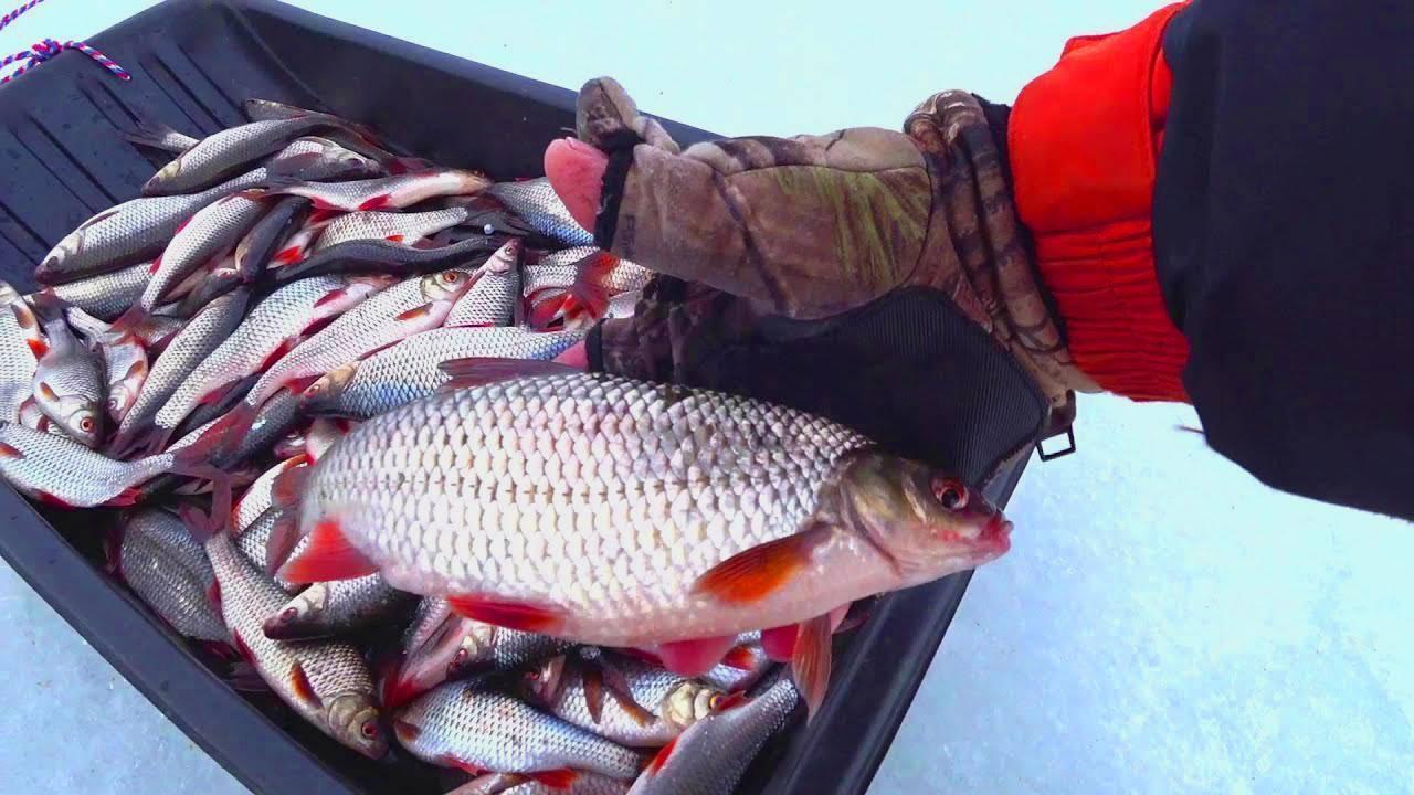 Как ловить рыбу руками на речке. как поймать рыбу голыми руками? что нужно для данной рыбалки