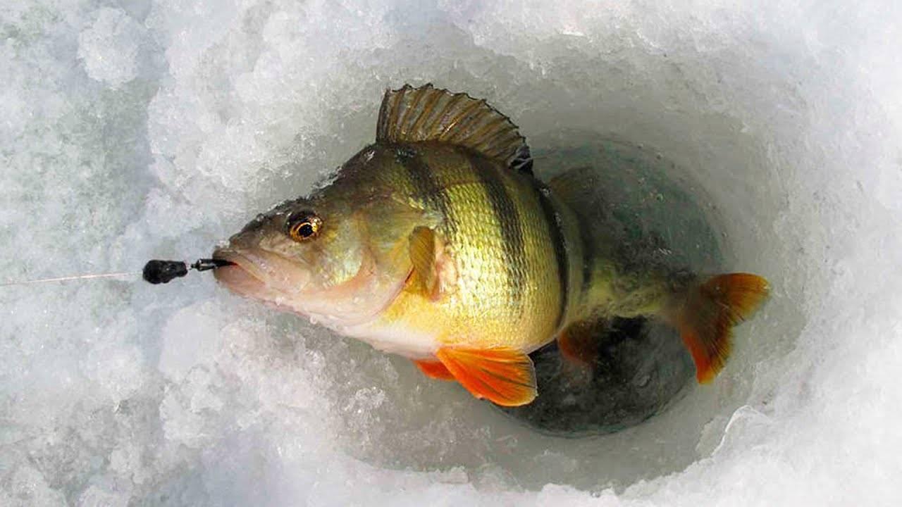 С чего начать начинающему рыболову: нелишние советы бывалого