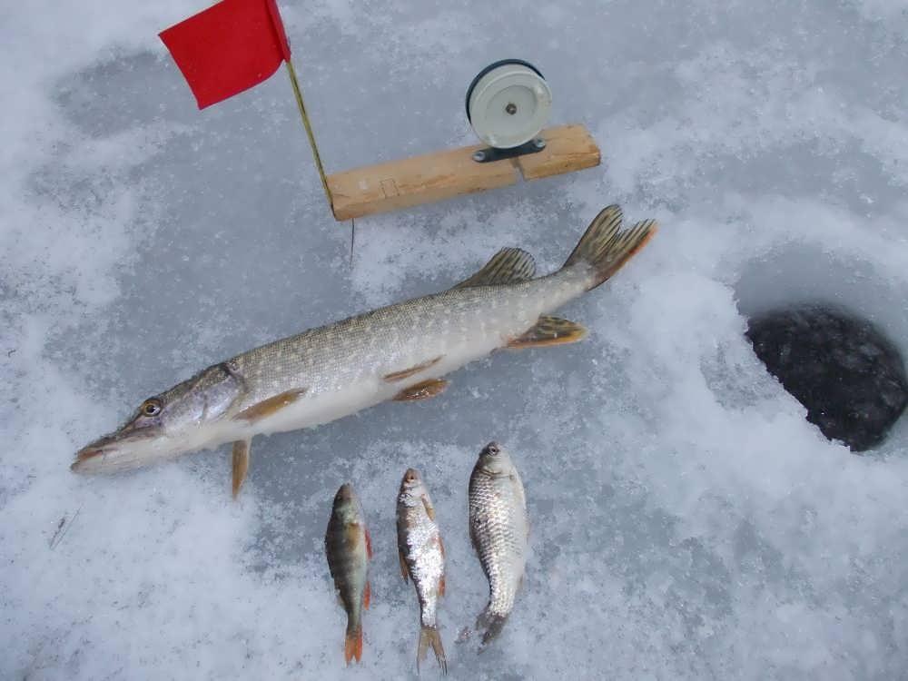 Ловля щуки зимой на блесну. топ 5 лучших зимних блесен на щуку