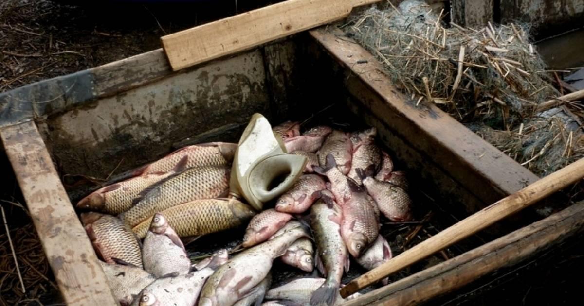 Самые рыбные места в волгоградской области