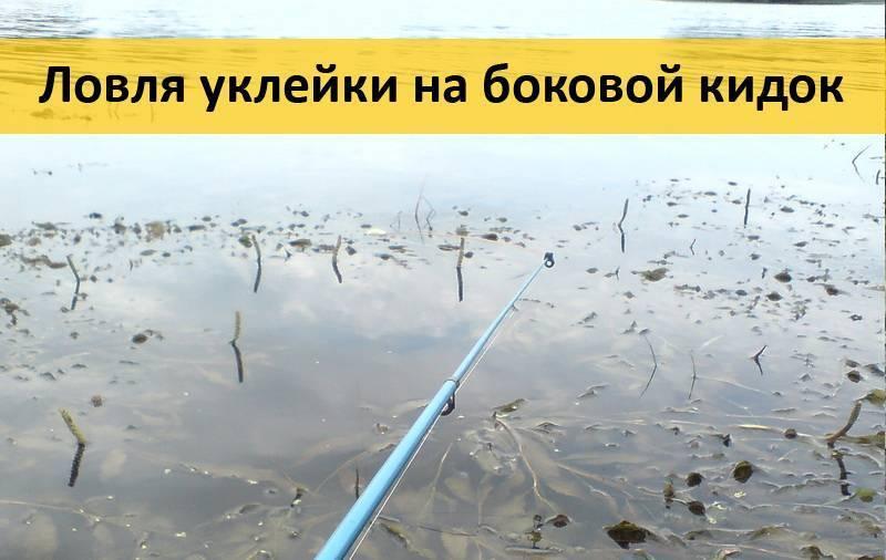 Ловля уклейки в ноябре и декабре | уклейка. энциклопедия ловли.